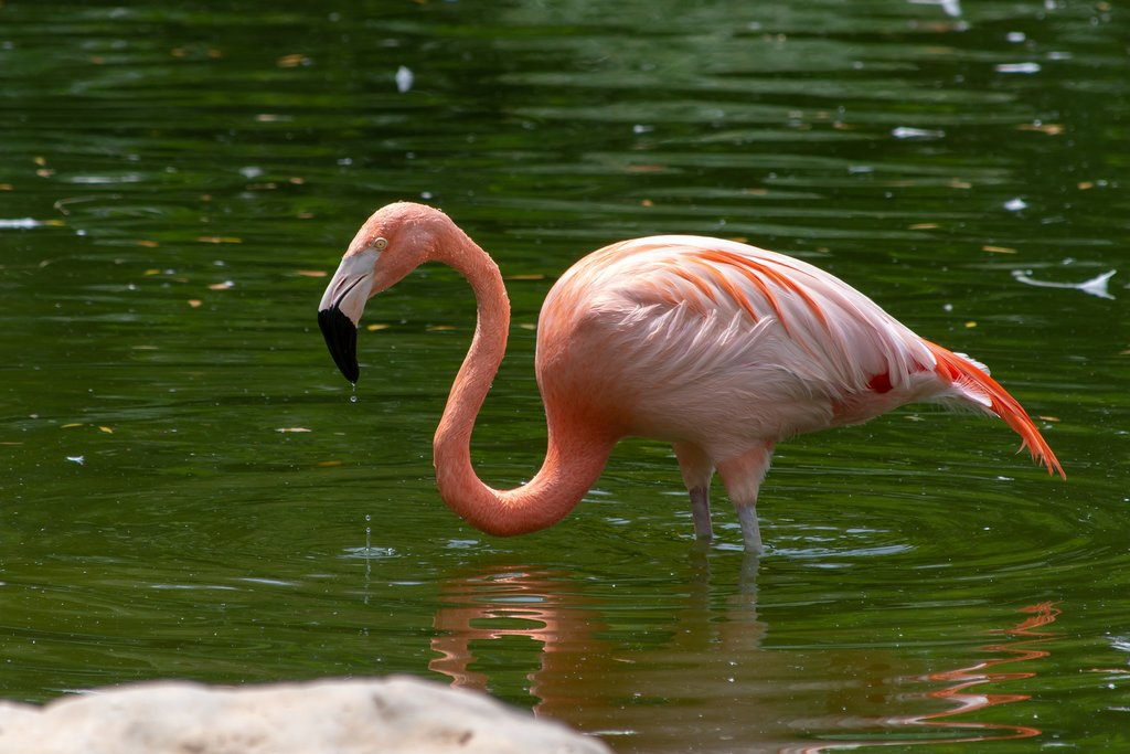 Look for pink flamingos amongst other bird species