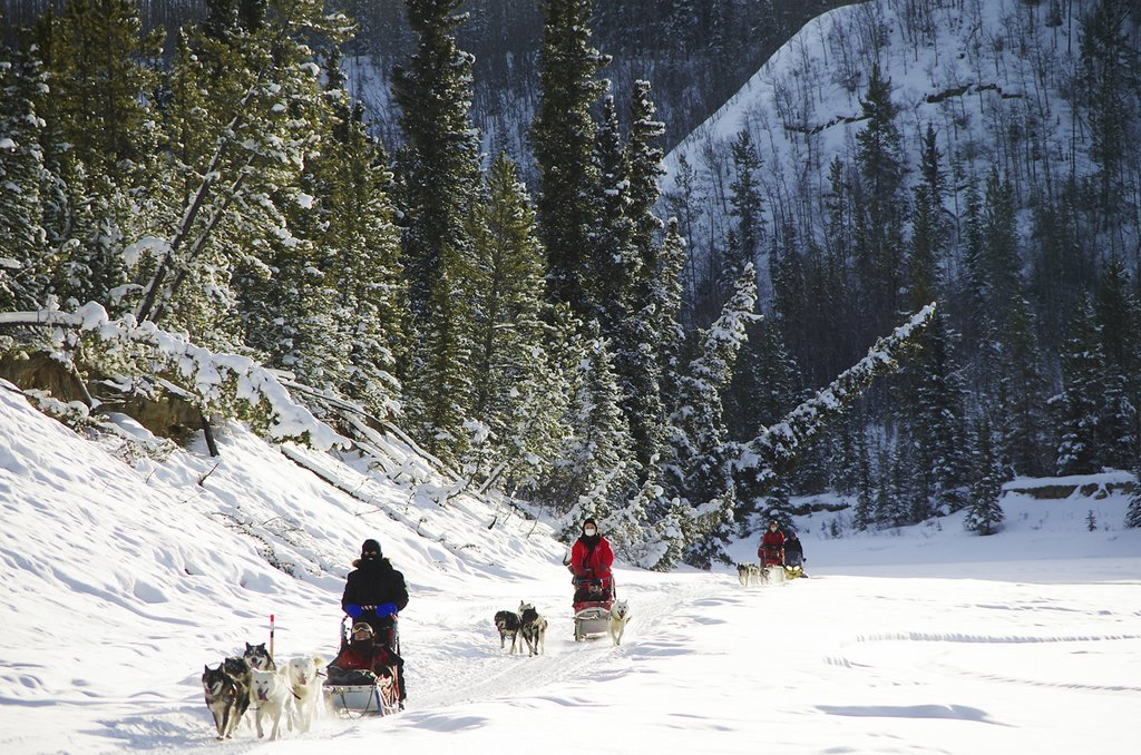 Dogsledding through a winter wonderland