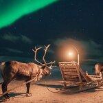 Reindeer Feeding & Northern Lights Experience near Tromsø