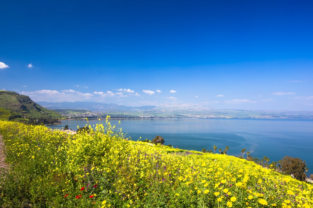 Blooming flowers on the Sea of Galilee