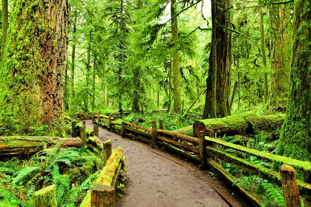 Trail through the old-growth forest of Cathedral Grove