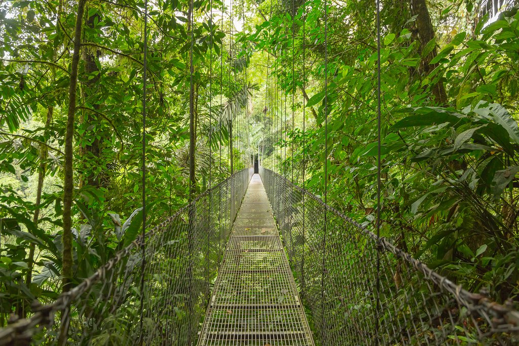 Suspension bridges in the rainforest canopy