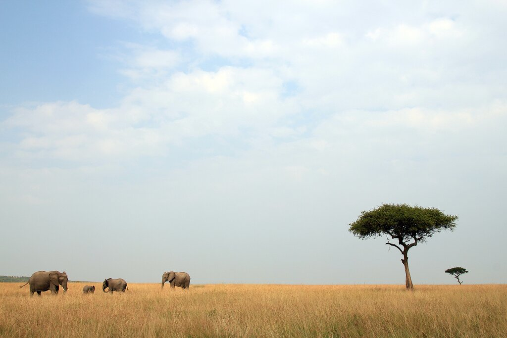 A family of elephants in the Maasai Mara National Reserve