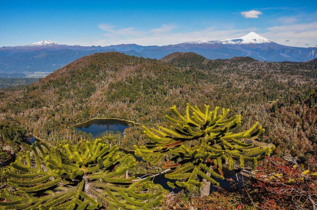 Look for rare flora species in Santuario El Cañi