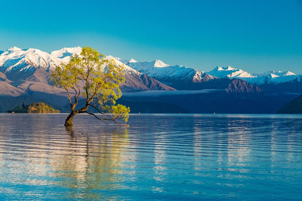 Lone Tree in the middle of Lake Wanaka