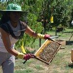 Photo from Kilo's Honey Farm