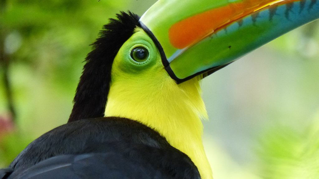 Toucans are among the Rio Verde's many exotic bird species.