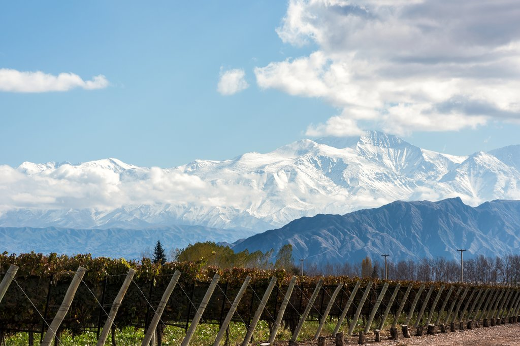 Vineyard at the foot of the Andes Mountains