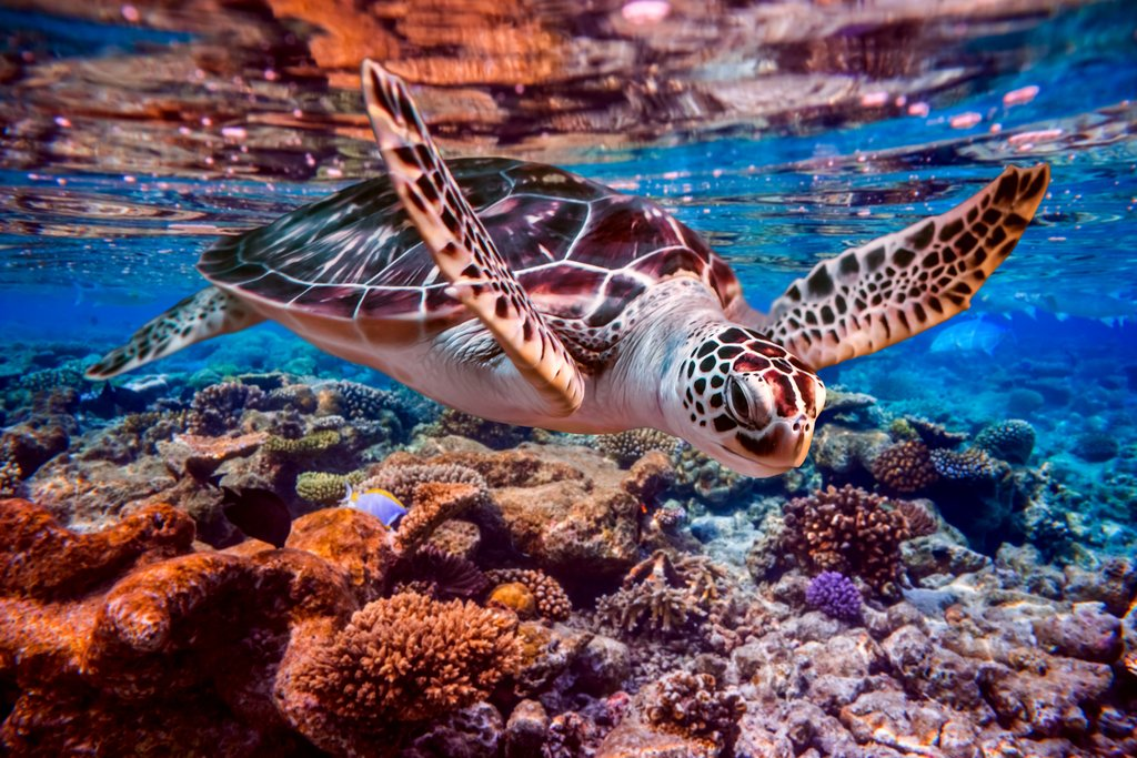 Come face to face with sea turtles on an optional snorkeling trip