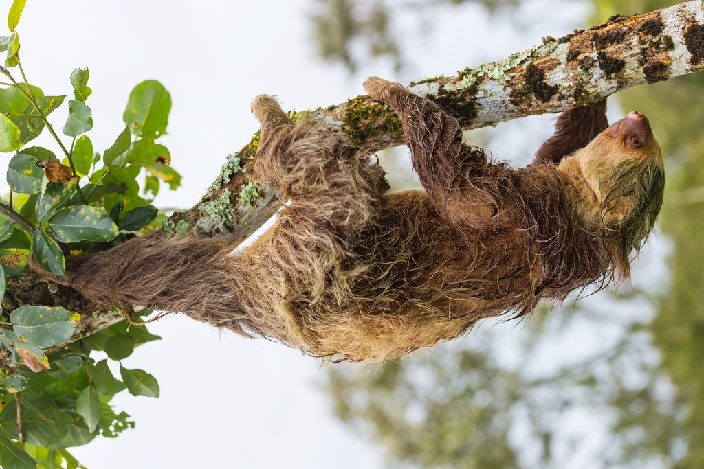 You might spot a sloth on the trail