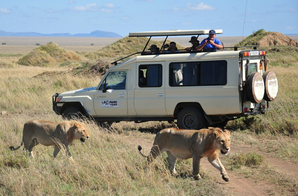Lionesses in Ngorongoro Crater