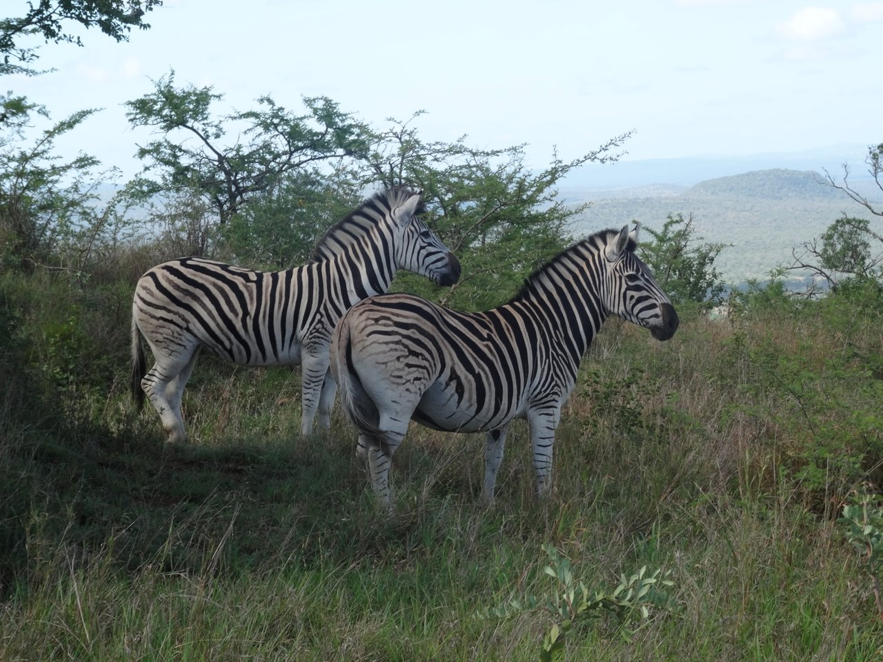 Find zebras in South Africa