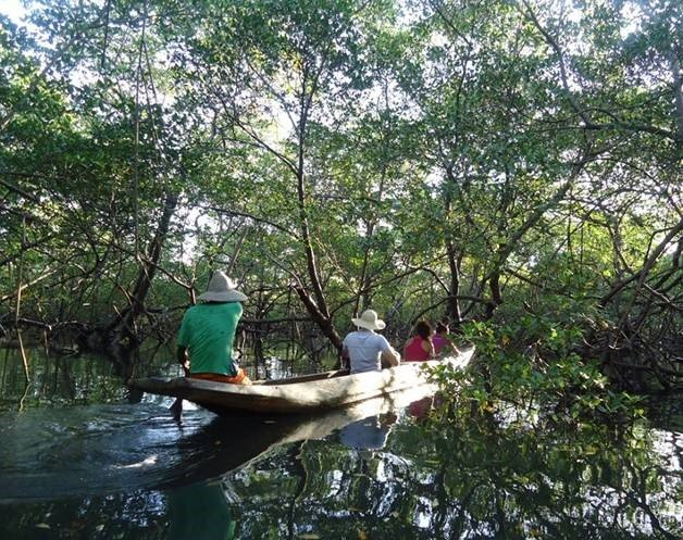 Canoeing through the mangroves