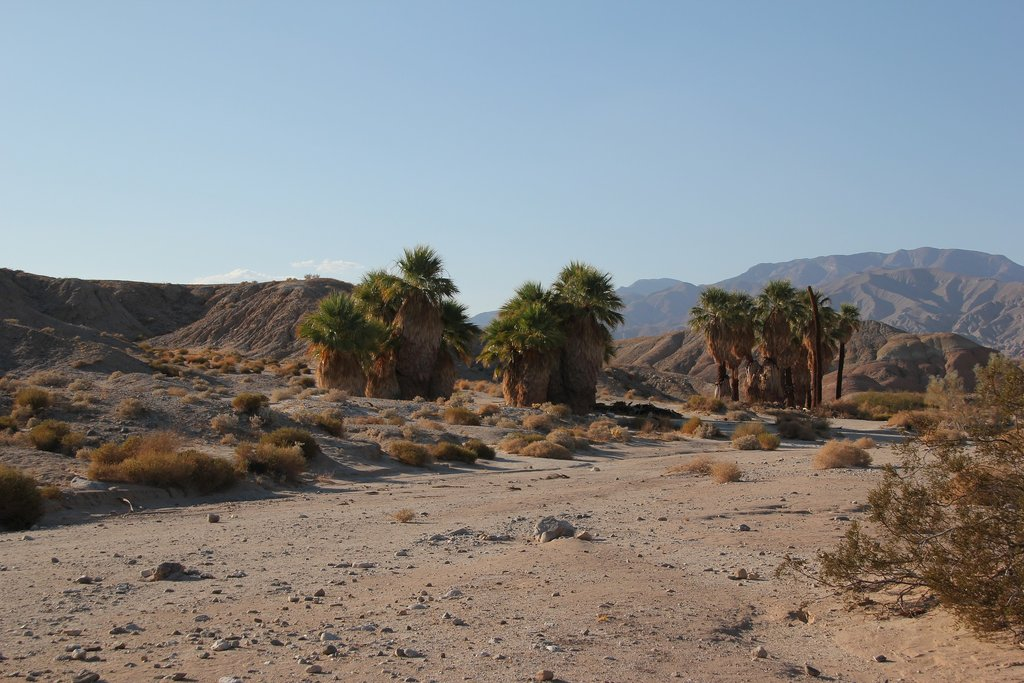 Trek through the Anza-Borrego State Park