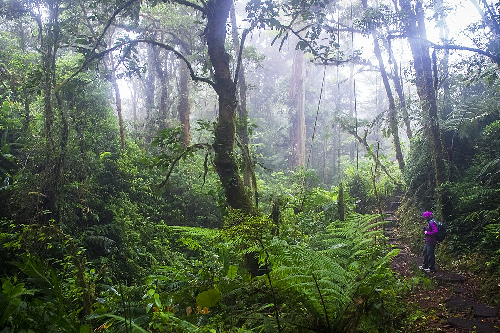 Nature trails in Monteverde