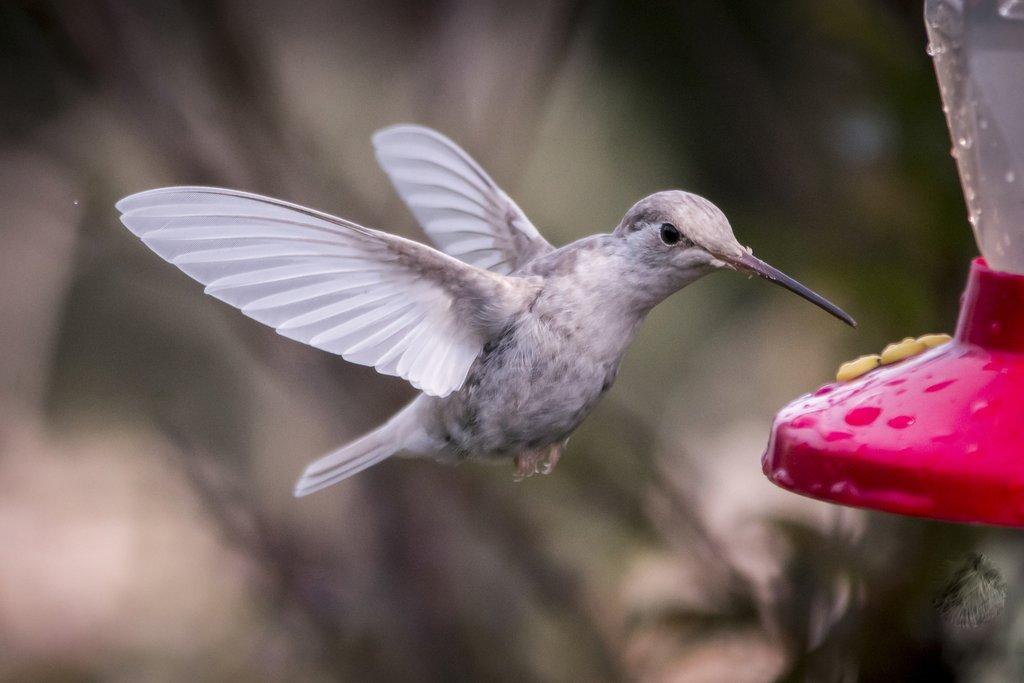 Keep an eye out for hummingbirds around the lodge in San Gerardo de Dota