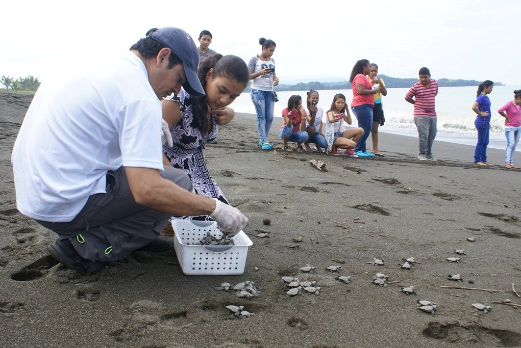Release of Sea Turtles