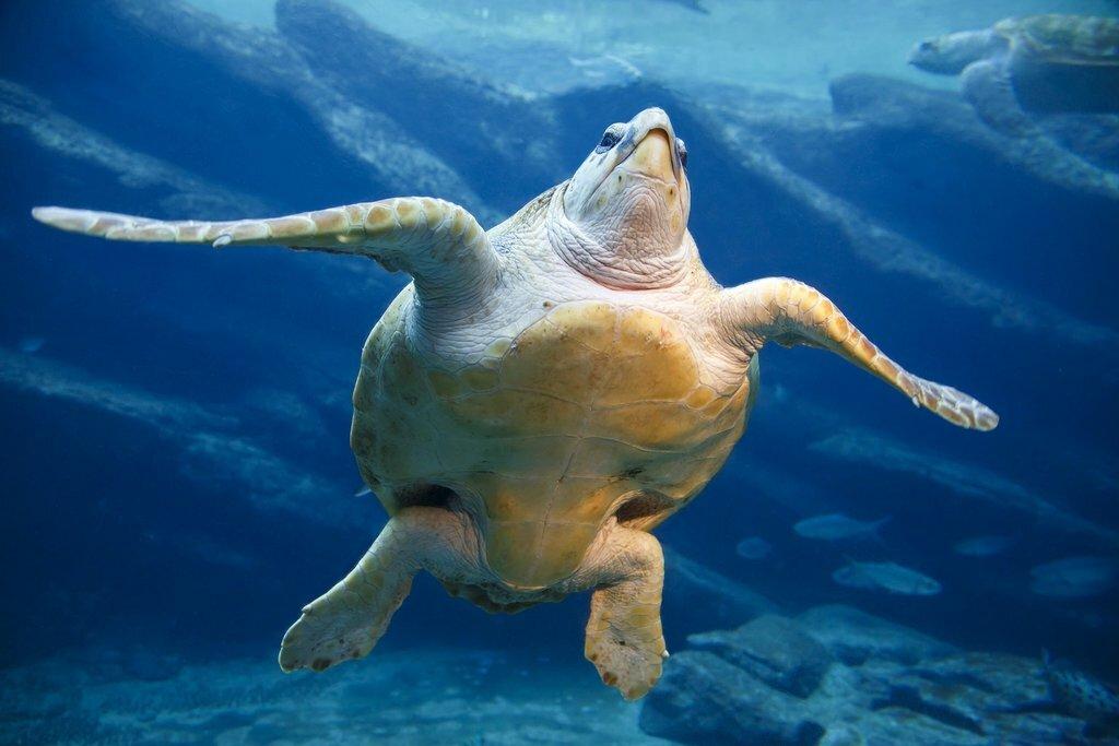 Look for sea turtles