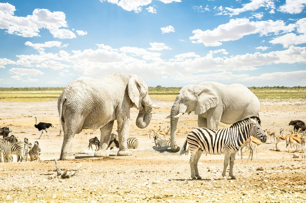 Group of animals relaxing in Etosha National Park