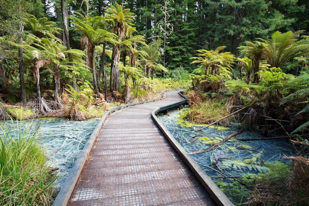 Whakarewarewa Forest, Rotorua, New Zealand