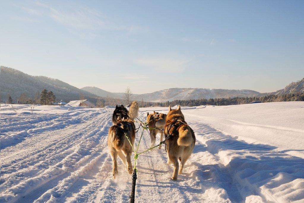 Dogsledding in Norway's Arctic