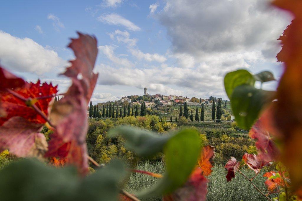 Istrian vegetation and sprawling villas
