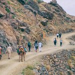 Hiking with mules
