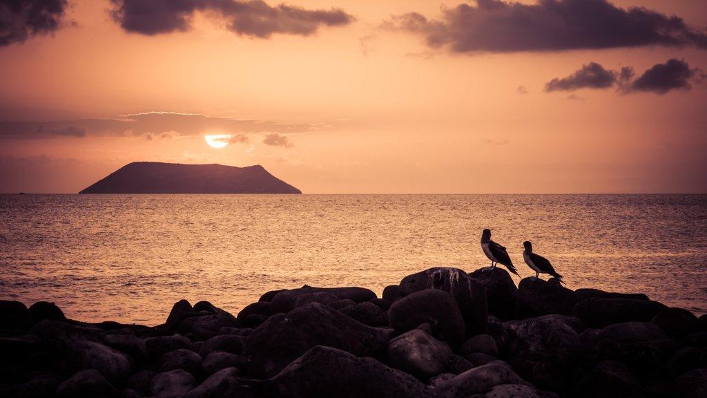Sunset view on Daphne Island