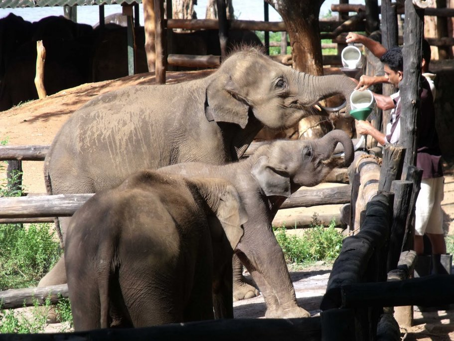 Elephant Transit Home in Udawalawe