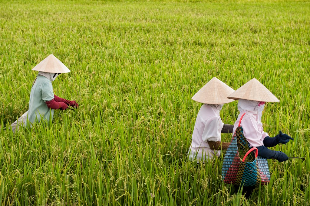 Bike bast rice fields in Vinh Long