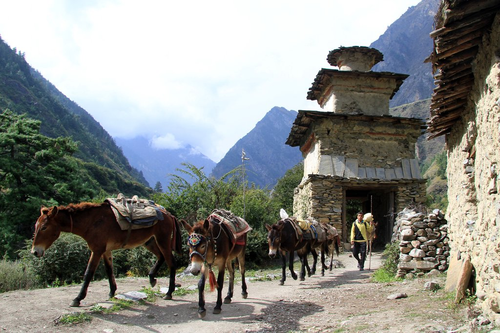 A group of donkeys in Jagat