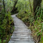 Hike through incredible Valdivian rainforest
