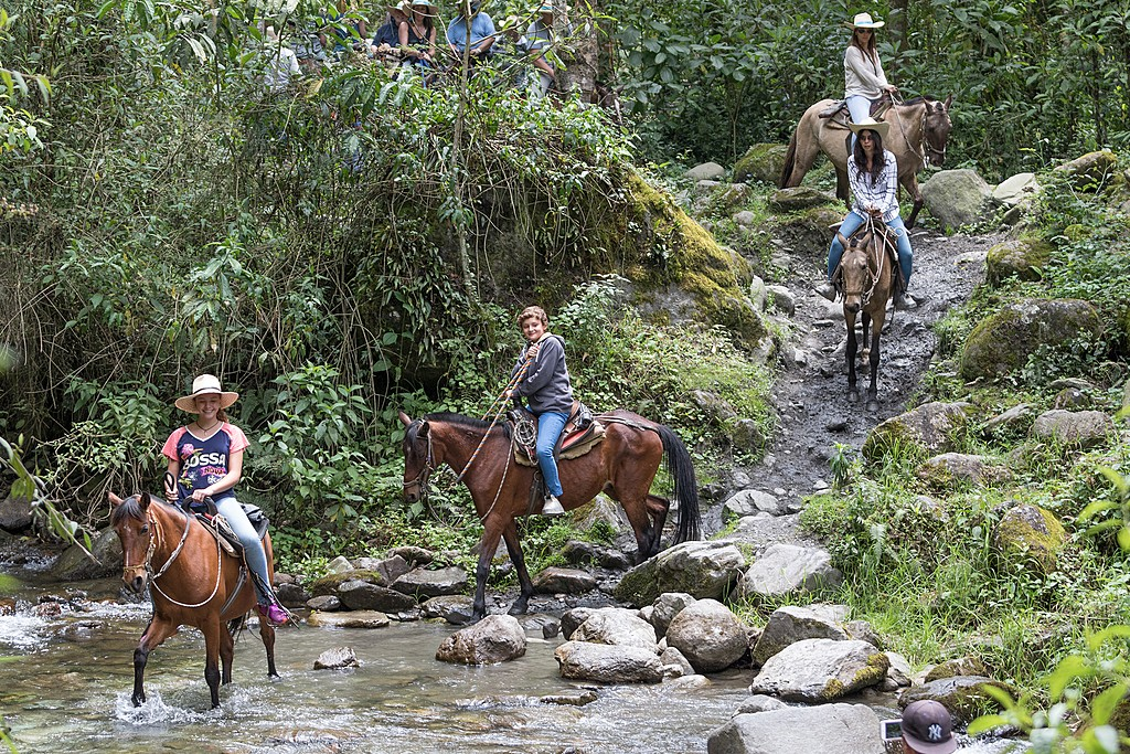 Horseback riding in the Cocora Valley
