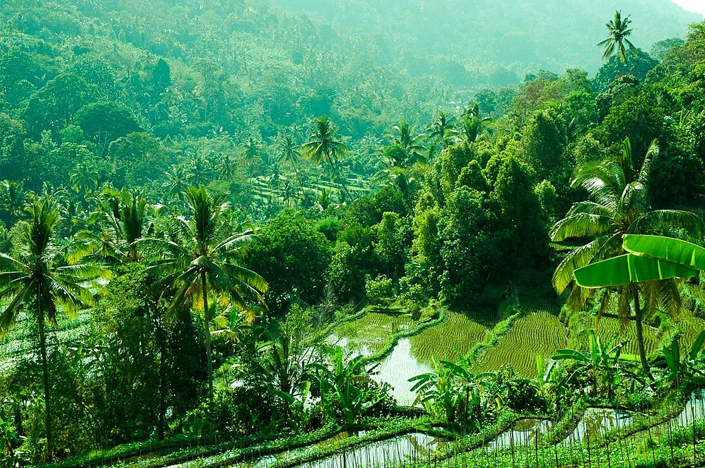 Be amazed by Bali's rice fields