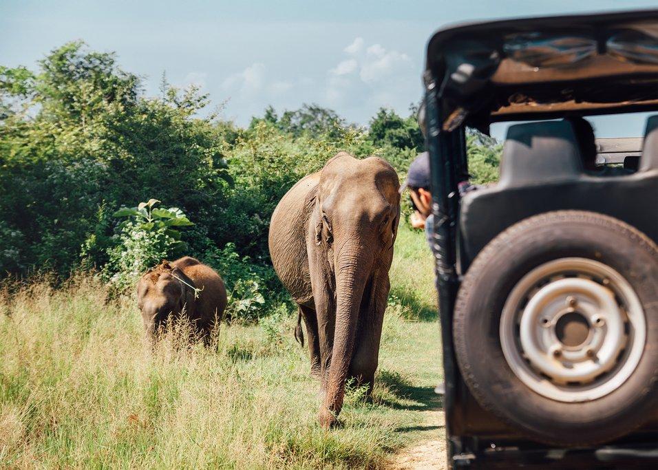 Go on a jeep safari through Udawalawa NP