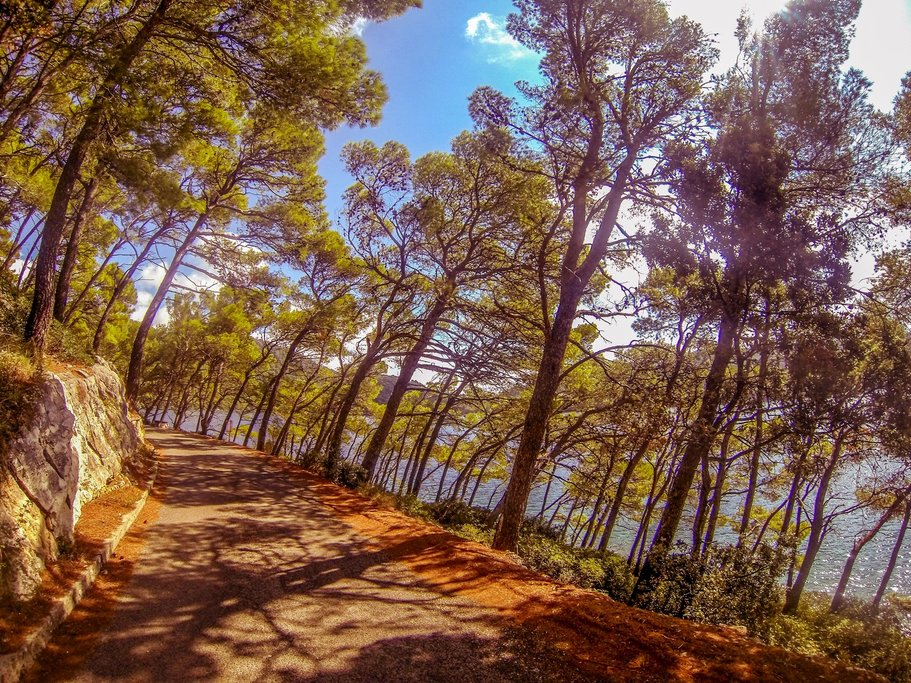 Mljet road in Pine trees shade around the lakes