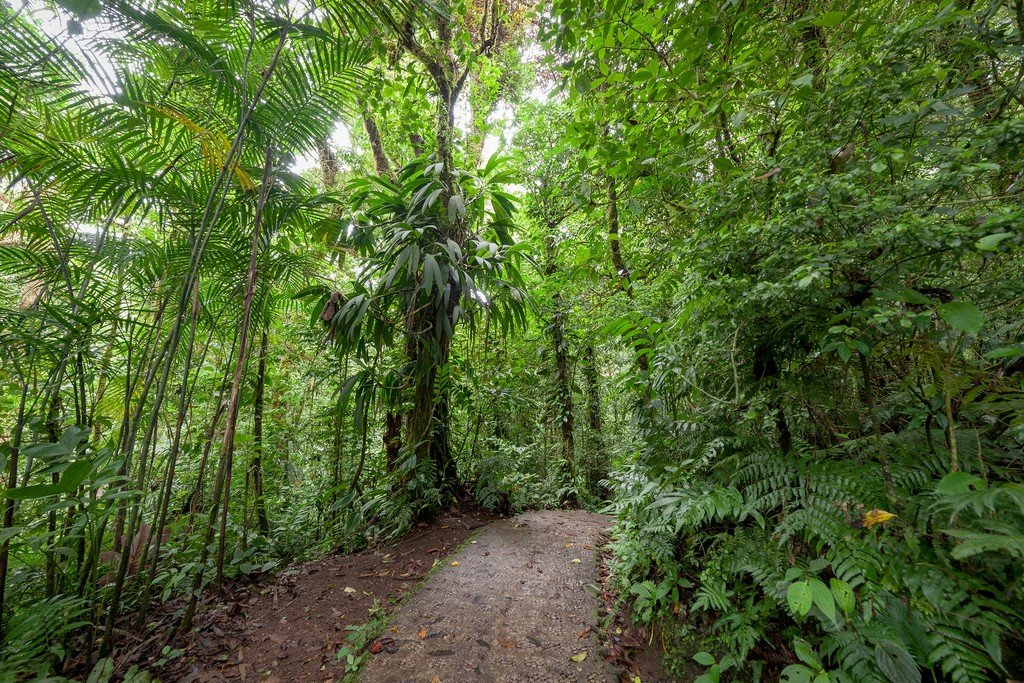 Walking trail in the cloud forest