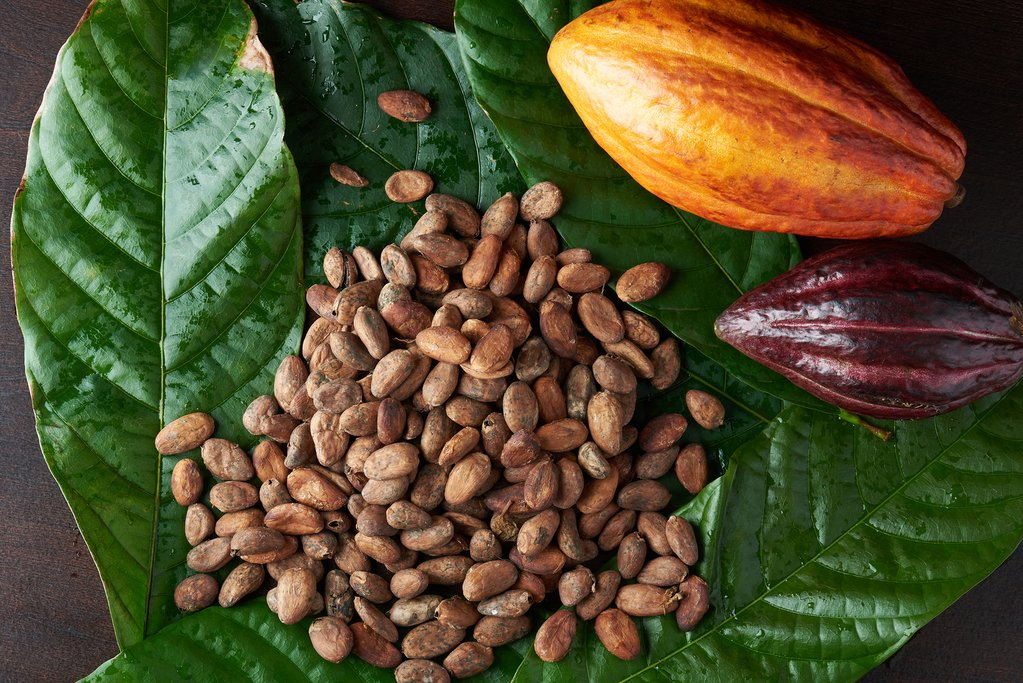 Participate in the harvest of cacao and the drying and grinding of the seed that produces creamy cocoa butter