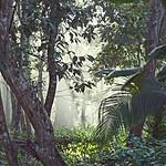 Costa Rican rainforest