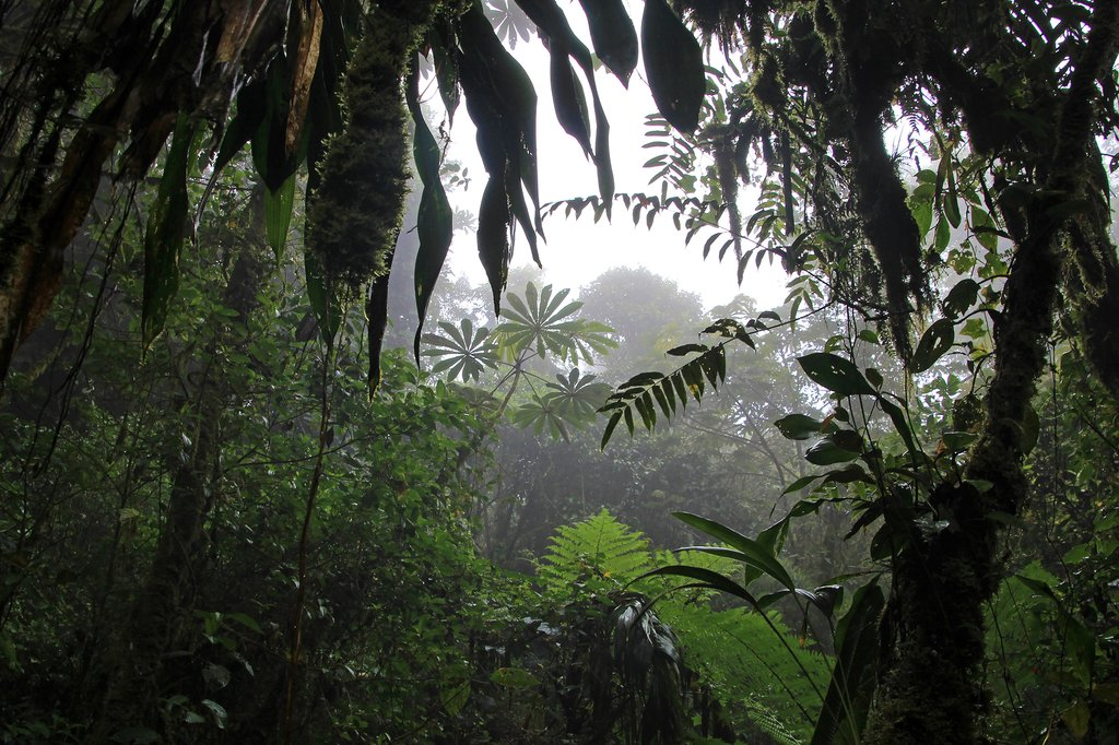 Monteverde's Cloud Forest