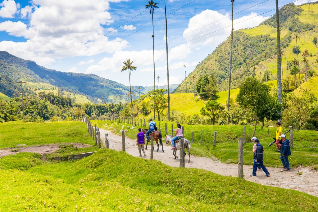 Hike or horseback ride through the Cocora Valley