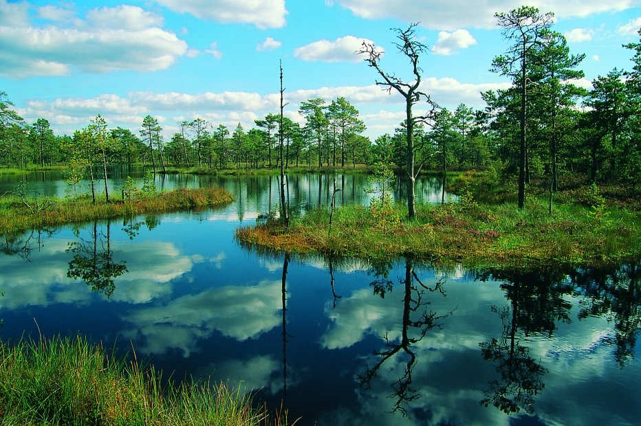 Beautiful swamp in Lahemaa National Park