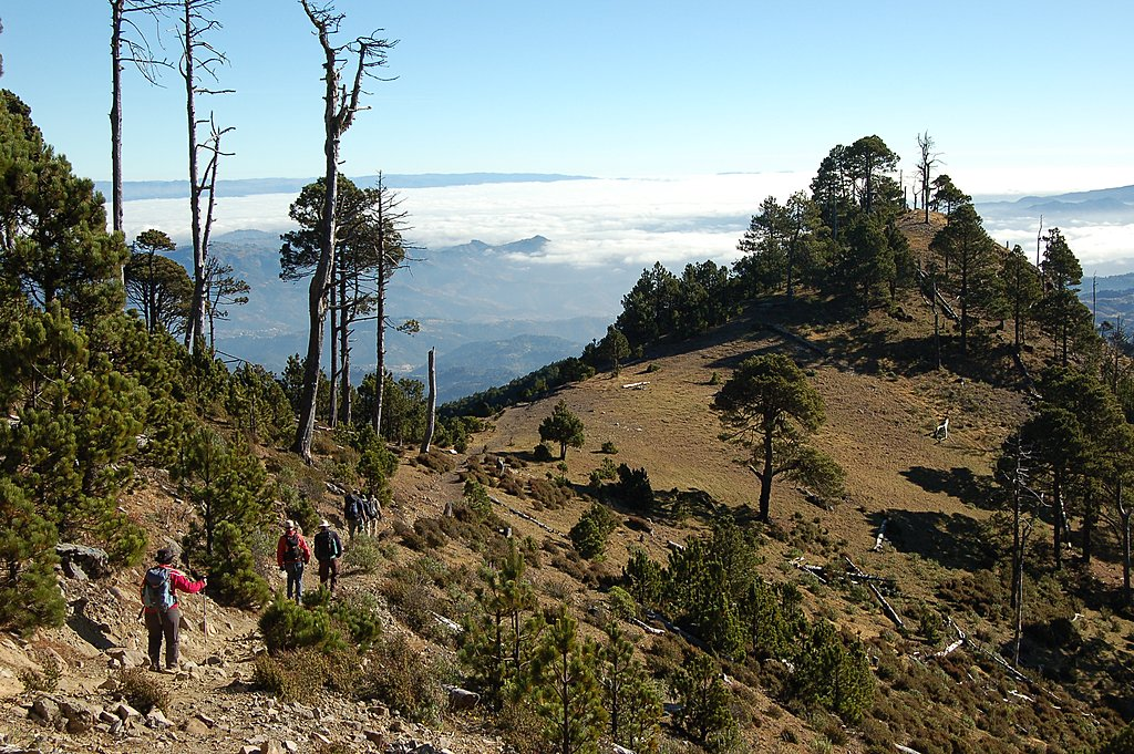 Hiking through pines of Tajumulco.