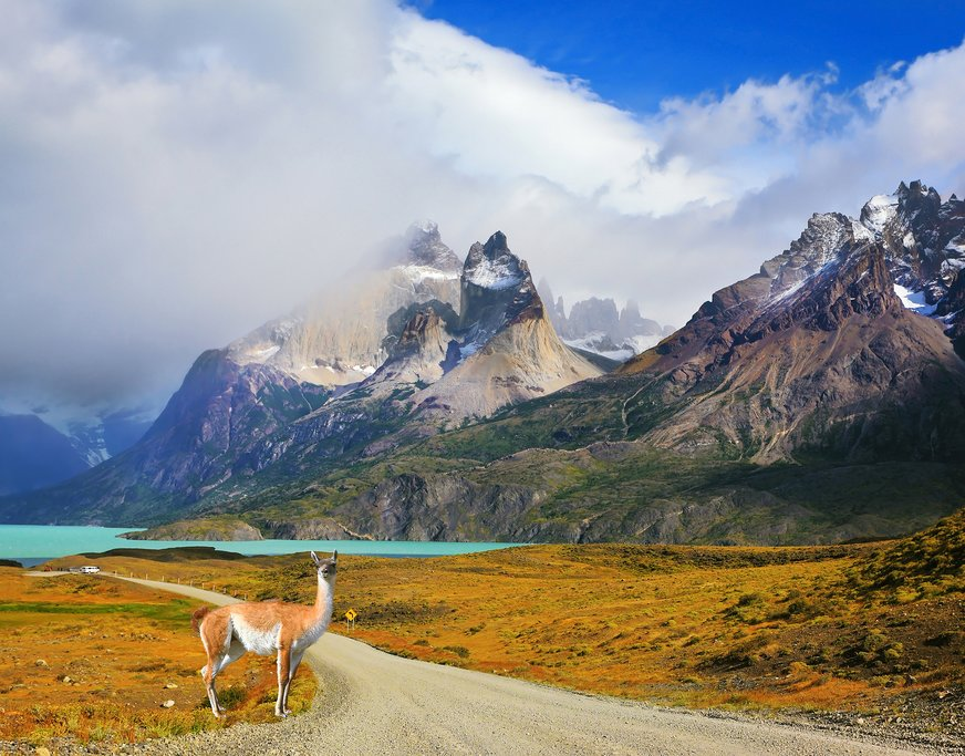 A wild guanaco sighting in Torres del Paine