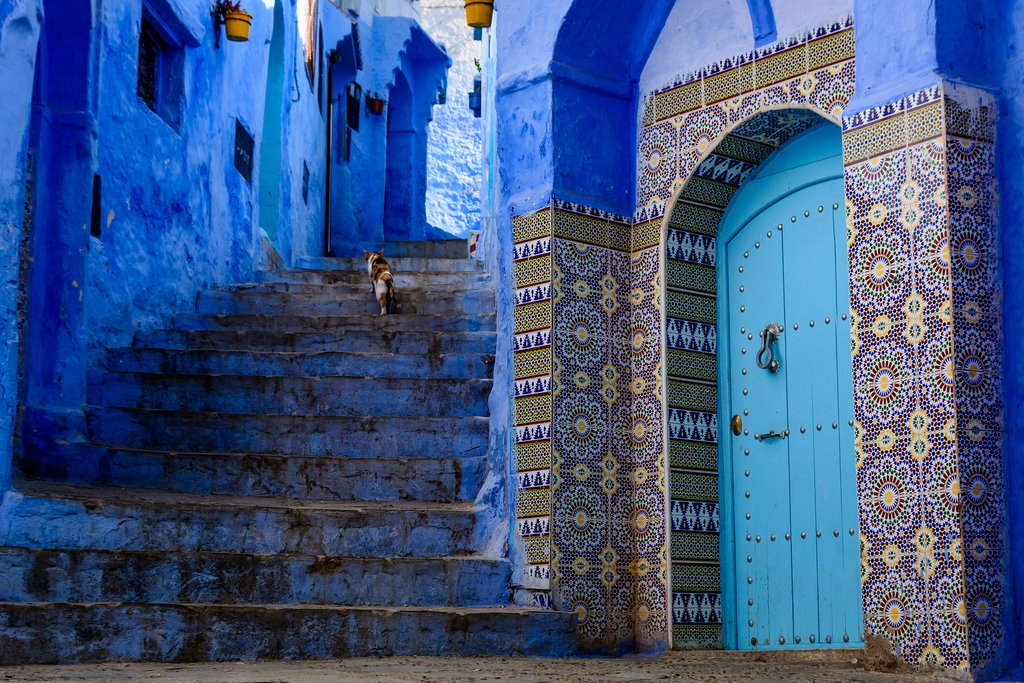 A cat climbs blue stairs in Chefchaouen