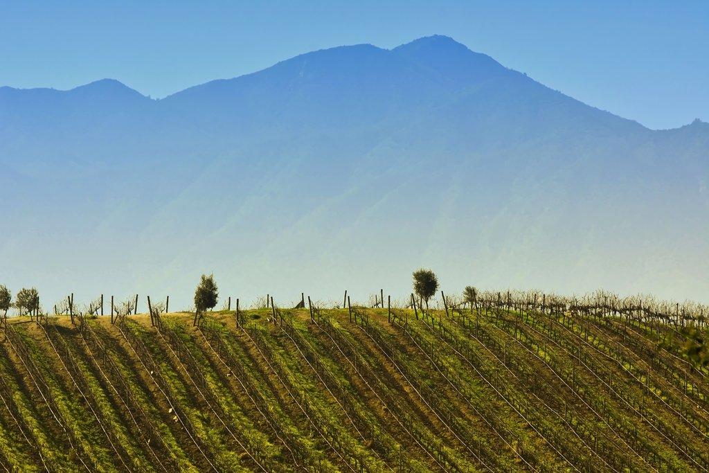 Go wine tasting in the Casablanca Valley
