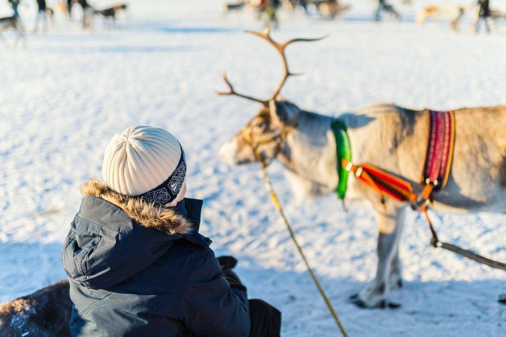 Reindeer sledding on a sunny day