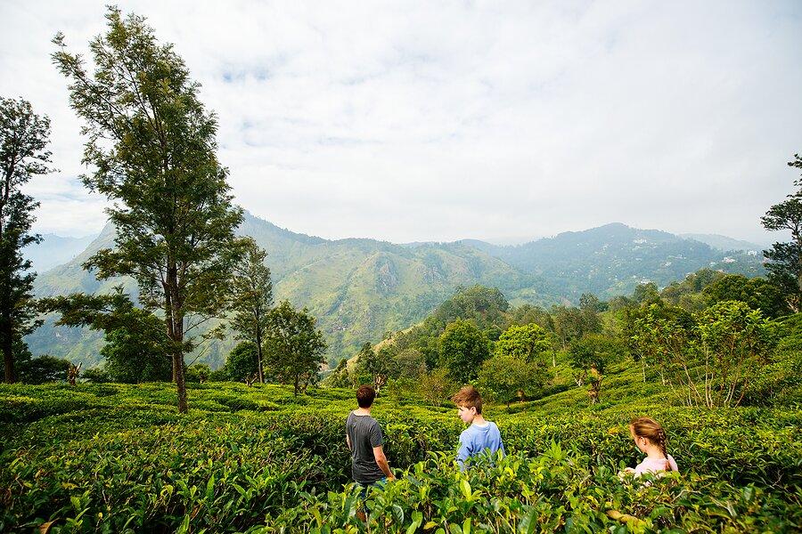 Visit a tea plantation in Sri Lanka