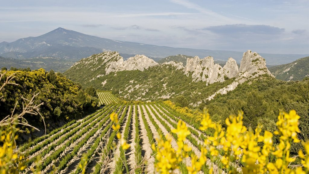 Vineyard in Gigondas