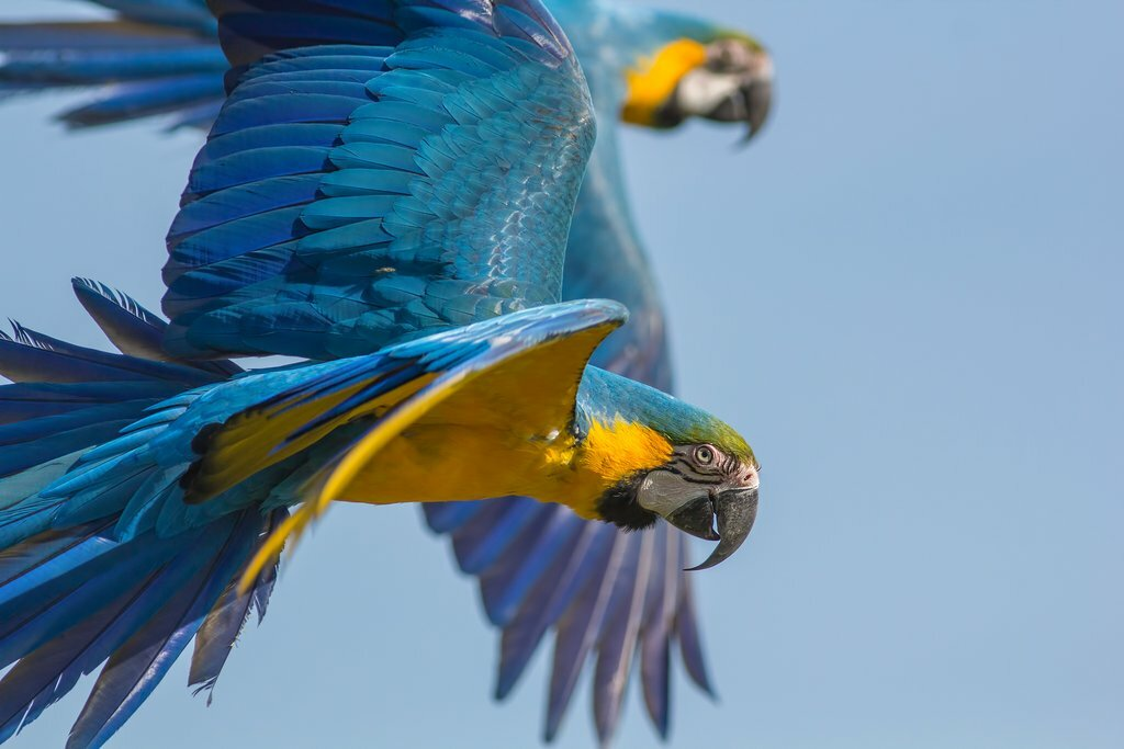 A brightly colored macaw in the rainforest